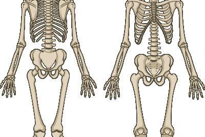 """二本目の矢 身体の土台を根本的に整える""""骨格・骨盤矯正"""""""