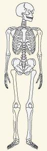 人体模型0