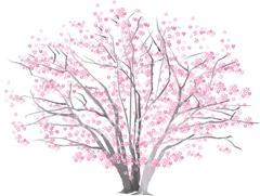一本桜のイラスト