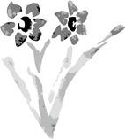 水仙の花イラスト